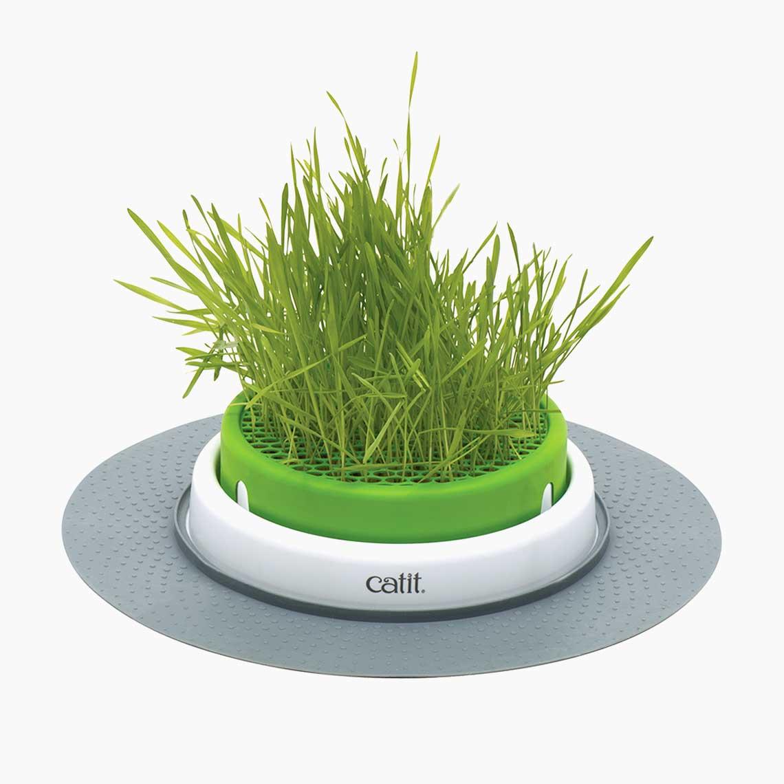 Jardinière d'herbe Senses 2.0