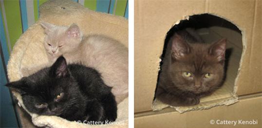 kittens week 9