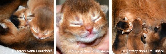 kittens week 2
