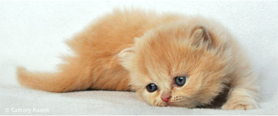 kittens week 4