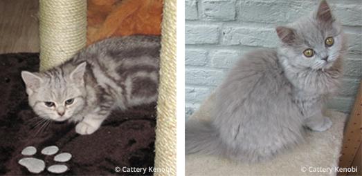 kittens 4 months