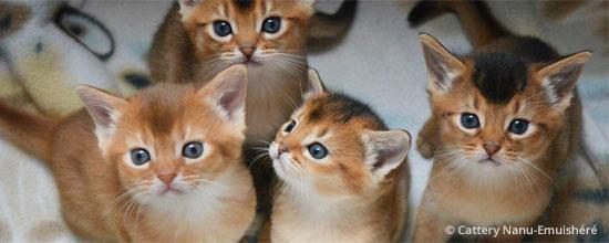 kittens week 5