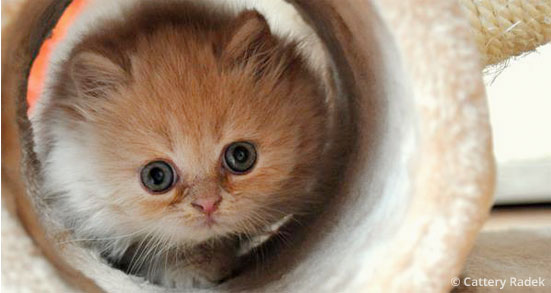 kittens week 7