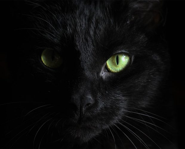 black cat considered bad luck
