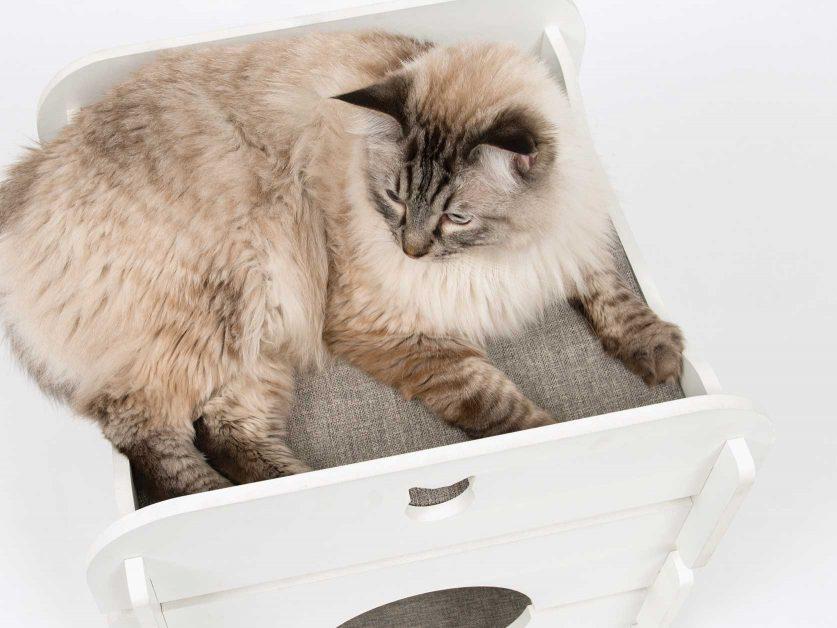 Comfortable Cushions