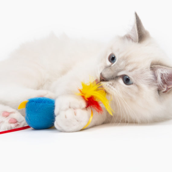 Pirates - Catnip Toy - Parrot C