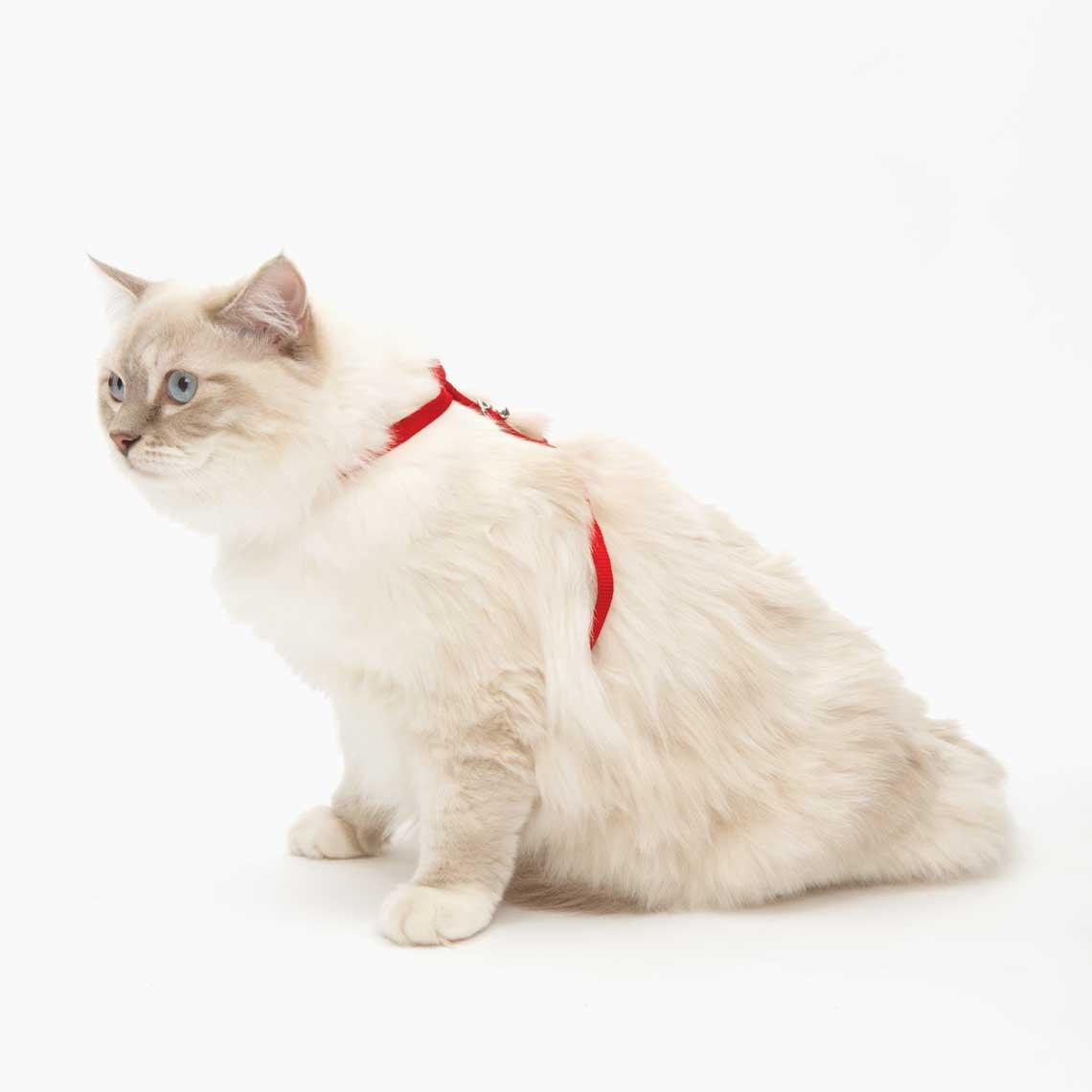 Black Small Catit Nylon Adjustable Cat Harness