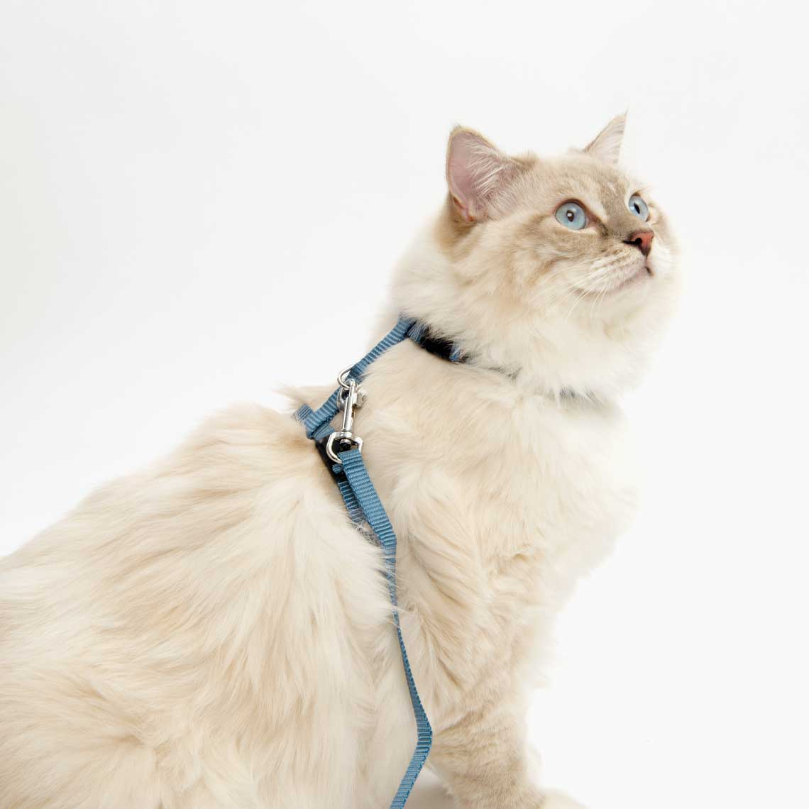 Adjustable Harness & Leash Set