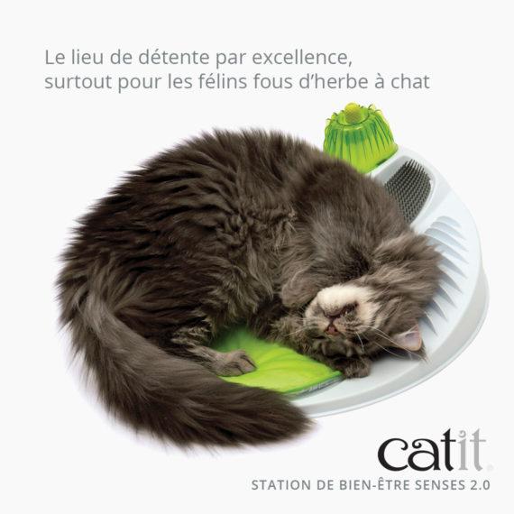 Station de Bien Être Senses 2.0 Catit – Le lieu de détente par excellence, surtout pour les félins fous d'herbe à chat