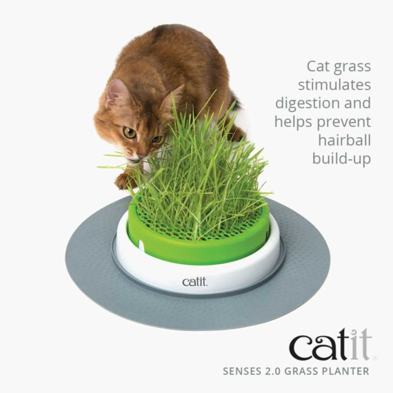 Senses 2.0 Grass Planter stimulates digestion and helps prevent hairball build-up