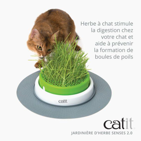 Jarinière d'herbe Senses 2.0 stimule la digestion chez votre chat et aide à prévenir la formation de boules de poils